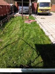 Вот так выглядит трава сейчас - IMG_20160417_105923.jpg